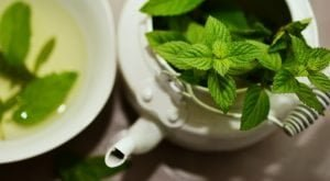 Mint For Fat Burning